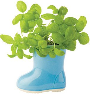 Mini Rainboot Garden