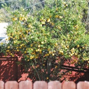 The lemon dilemma