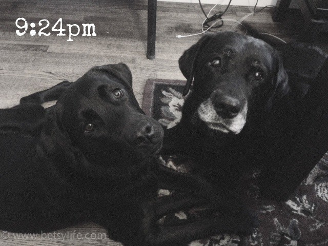 text-Wordless-Wednesday-dogs-924pm