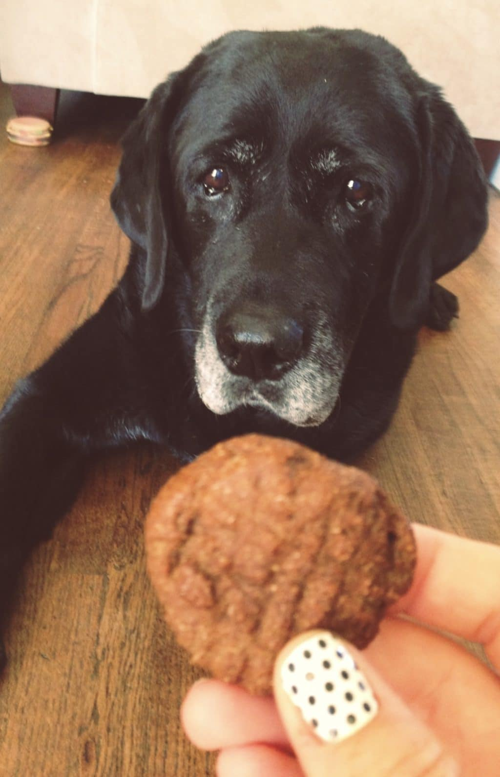Pumpkin and Molasses Healthy Homemade Dog Treats.
