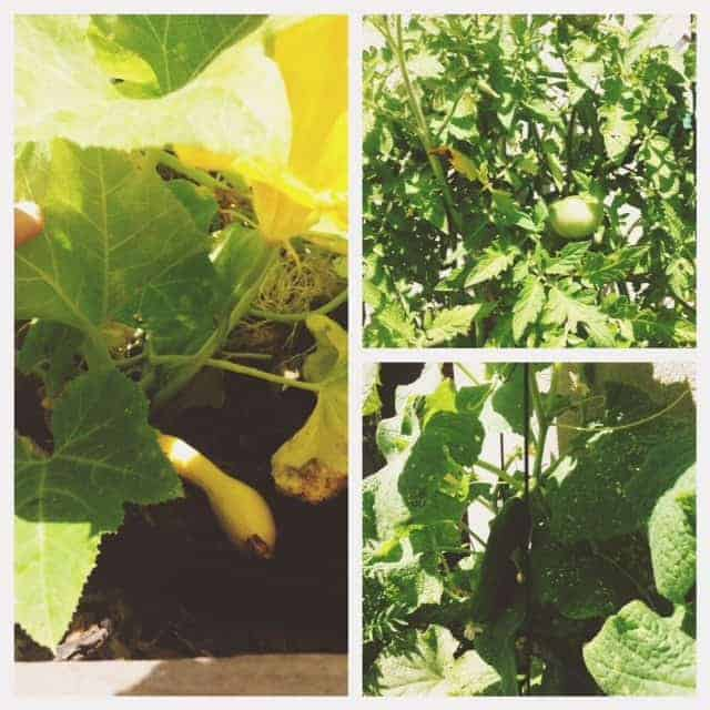 Summer Garden #SproutTime