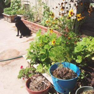 Garden Update {Giveaway}