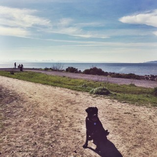 Point Isabel Dog Park. East Bay