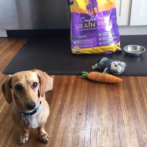 Healthy Dog Food Diet and The 5 Signs of Wellness