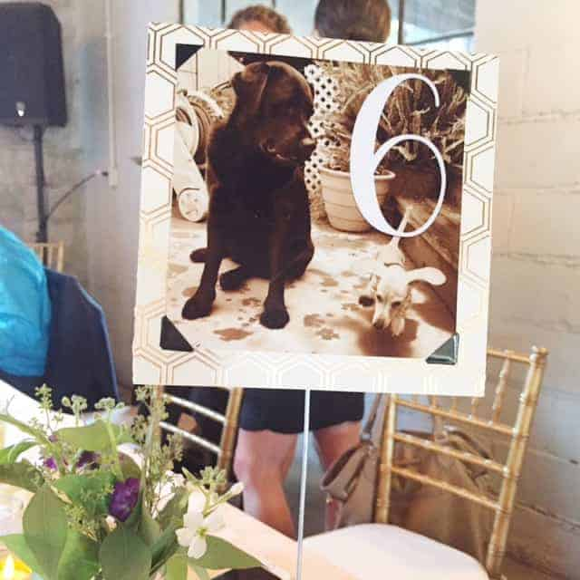 Dog Table Number Cards