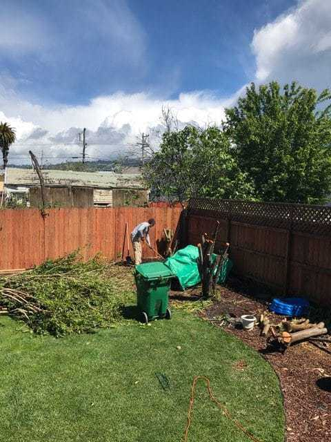 Longfellow, Oakland California backyard gardening. Chopped down bushes and a green recycling bin