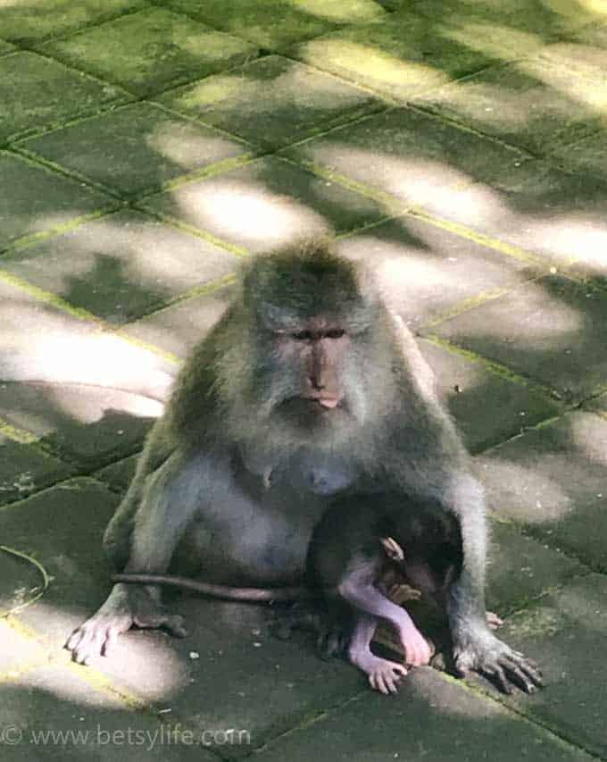 Ubud Monkey Forest. Bali Indonesia