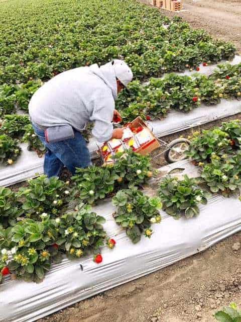Touring Monterey with California Strawberries