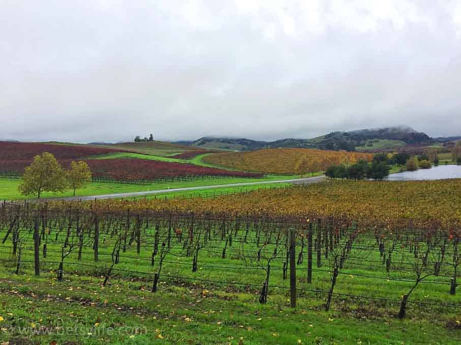 Most beautiful wineries in Napa