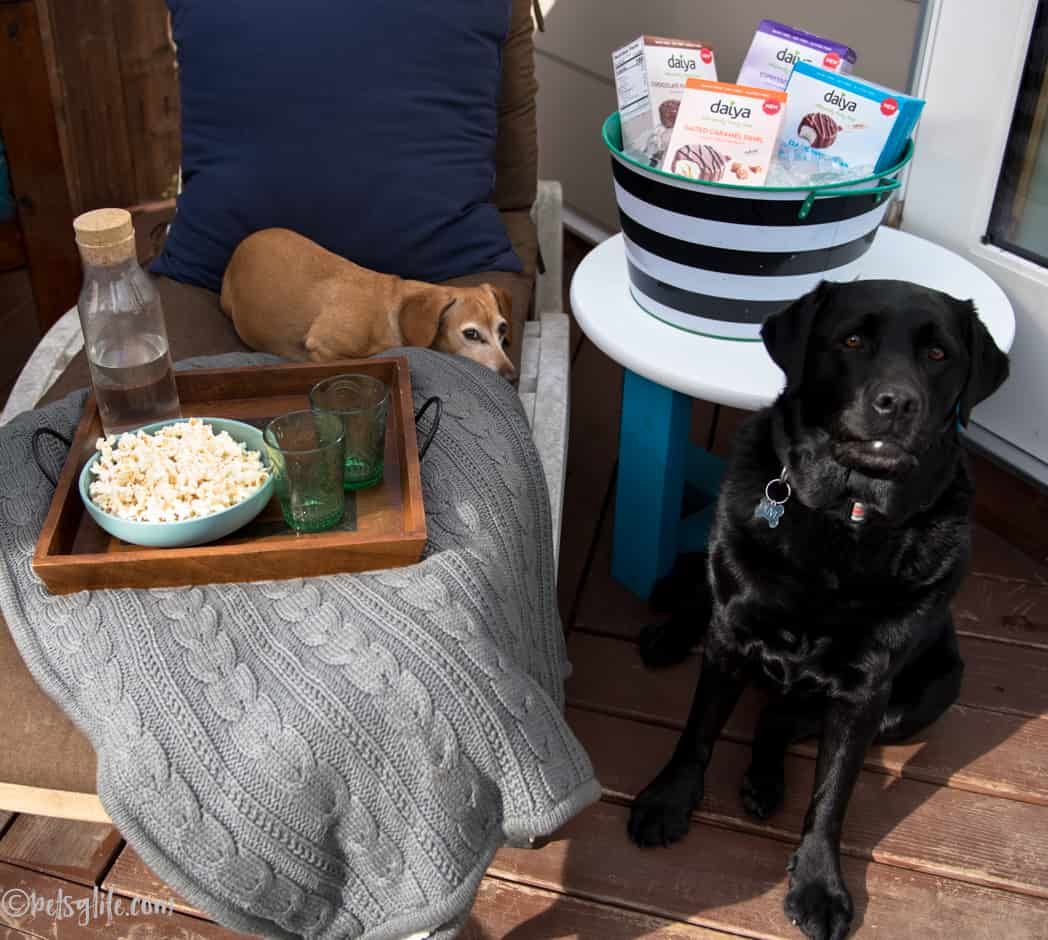 two dogs on a patio next to a tray of snacks and a cooler of frozen dessert bars