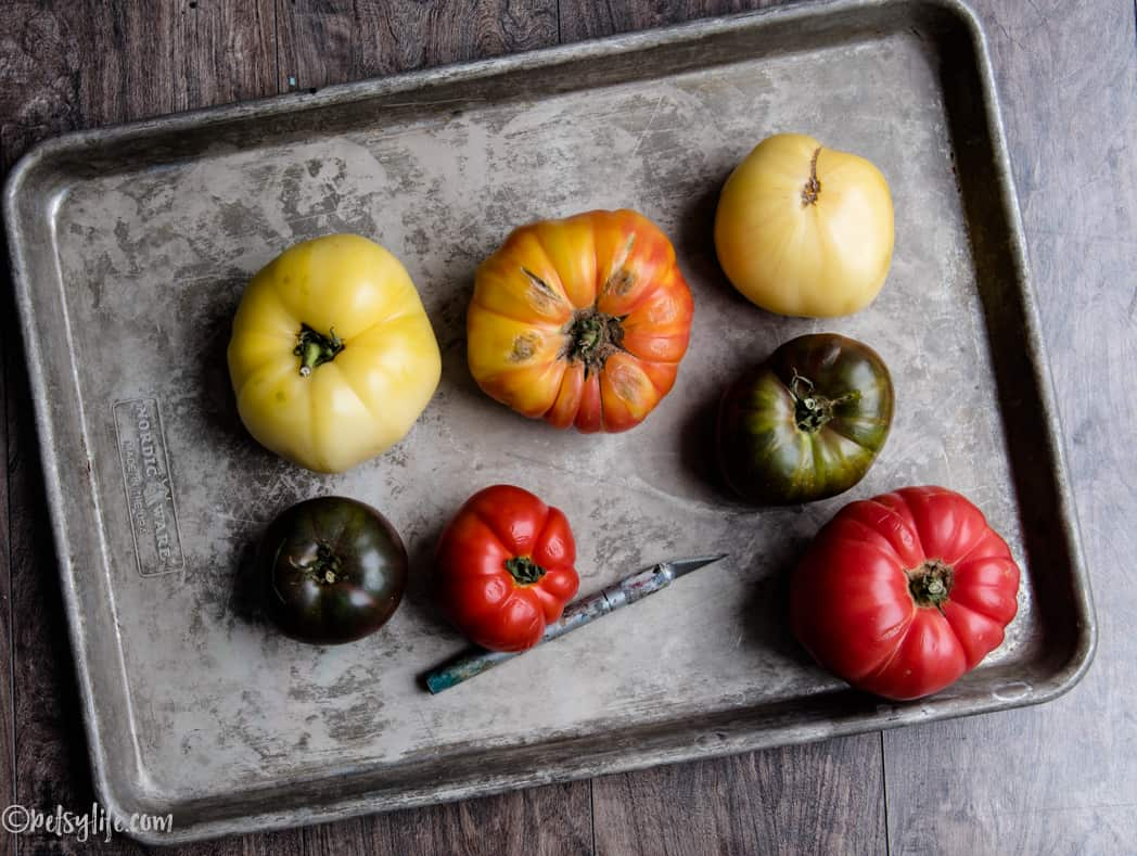 different colored heirloom tomatoes on a metal tray with an x-acto knife